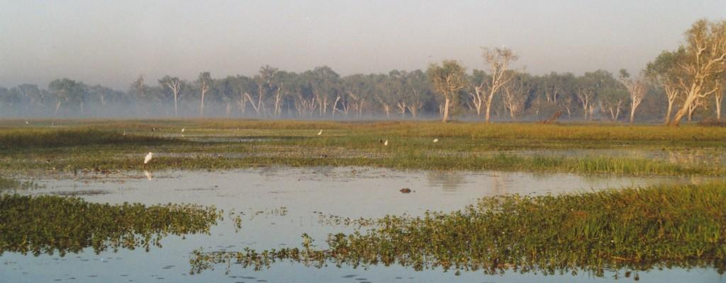 Crocodile habitat Yellow Water, Kakadu National Park, Northern Territory