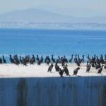 Robben Island wharf, South Africa
