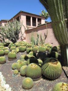 Golden Barrel cacti, Lotusland