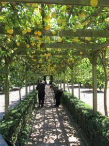 Lemon Tree Walk, Lotusland