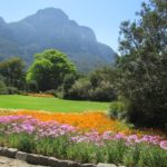 Kirstenbosch Gardens, South Africa