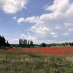 Poppies Saint Remy